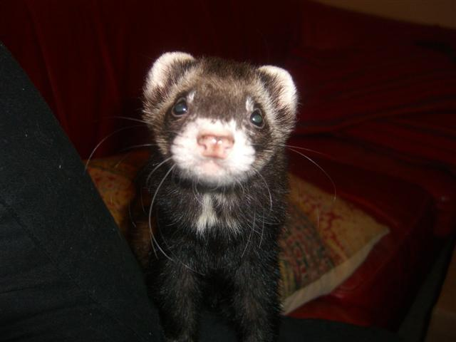 march-26-09-ferrets-007-small